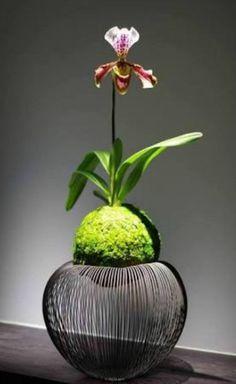 suporte de orquidea para kokedama #Kokedamas