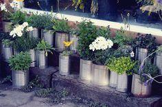 tin can container garden.