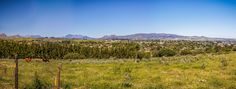 Drive through the scenic suburbs of Wellington in the Winelands (Boland) and discover the colourful world of this popular town. Property For Sale, Real Estate, Popular, World, Travel, Beauty, Viajes, Real Estates, Popular Pins