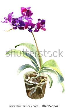 Watercolor orchid in a pot. Hand drawn illustration by Darya Zhuravleva