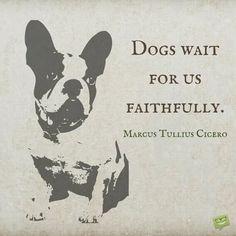 Dogs wait for us faithfully. Marcus Tullius Cicero