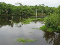 Rio Bravo Conservation and Management Area in Northern Belize