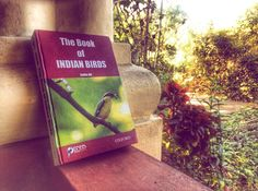 Related to last post ordered this the second week I was here and it's FINALLY arrived. This is as invaluable a field guide as you can get and it's really easy to find all the birds I'm looking for as well because they're handily broken down into colour size and so on. Now I'm going to have some fun. #birdsofgoa #birdwatching #bookstagram