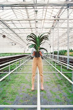 Photography: Jasmine Deporta's beautiful shots inside orchid greenhouses