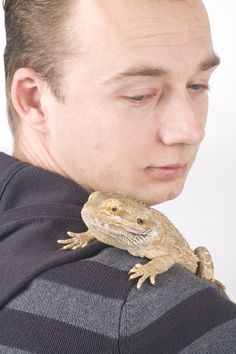 Tips for protecting yourself from salmonella with bearded dragons. Salmonella is rarely contracted from bearded dragons, but still be aware. Bearded Dragon Cage, Bearded Dragon Funny, Dragon Nest, Pet Dragon, Reptile Cage, Reptile Enclosure, Best Diets, Guinea Pigs, Animal Photography