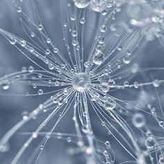 Solar system by zeenon on DeviantArt Water Droplets, Water Photography, Flower Backgrounds, Rain Drops, Solar System, Astronomy, Dandelion, Bubbles, Deviantart