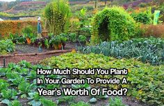 How Much Should You Plant In Your Garden To Provide A Year's Worth Of Food? What a great question to ask ourselves. Find out with this article