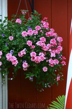 8 Creative and Modern Tricks: Backyard Garden Planters Window Boxes backyard garden vegetable layout. Backyard Trees, Backyard Garden Landscape, Small Backyard Gardens, Garden Oasis, Outdoor Flowers, Outdoor Planters, Easy Garden, Garden Ideas, Garden Boxes