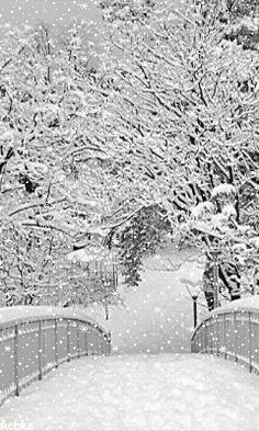 JANUARY SNOW...COLD AND BEAUTIFUL WINTER DAY... BELLA DONNA