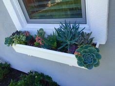 My flowering succulents in the cottage window box :-)