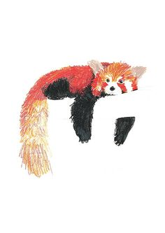 Beautifully drawn with Color Pencil  Red Panda on the Tree 2  Pear Tea Paperie Original Panda Series  INSTANT DIGITAL PRINT   No Physical