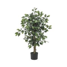 Nearly Natural 3' Ficus Silk Tree, Green (390 DKK) ❤ liked on Polyvore featuring home, home decor, floral decor, artificial flowers, artificial tree, green, home décor, plants and trees, tree trunk and artificial ficus tree