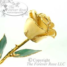 Popular for Weddings! Our natural White Forever Rose is beautifully trimmed in 24K Gold!
