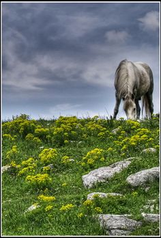 High Dynamic Range (HDR): A Useful Photographic Tool by Kenneth Hoffman. Photo: Horse captured by mio. (Click image to see more from mio.) http://www.picturecorrect.com/tips/high-dynamic-range-hdr-a-useful-photographic-tool/