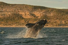 Puerto Pirámides - Biedma - Provincia de Chubut Argentina Patagonia, Whale, Travel, Animals, Lakes, The World, Whales, Good Photos, Buenos Aires