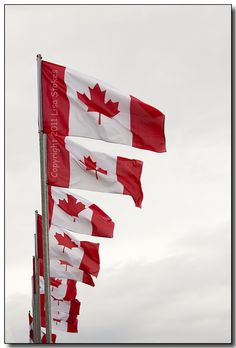 Canadian flags.