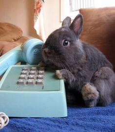 Hello, do you deliver carrots? bunnies!