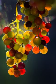 backlit grapes by Jan Roskamp on 500px
