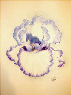 Iris tattoo for Hailey Iris Tattoo, Iris Flower Tattoos, Pencil Tattoo, Violet Tattoo, Tattoo Arm, Watercolor Pencils, Watercolor Flowers, Watercolor Paintings, Tattoo Watercolor