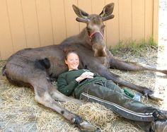 What I wouldn't give to be able to take a picture like this!! OMG!! Greatness!! Vanessa and Jack The Moose -- he's quite a bit younger in this shot.