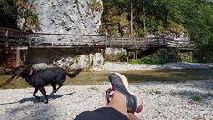 Top Ausflug: Auf dem Holzweg ins Mendlingtal | Wiederunterwegs.com Horses, Animals, Animales, Animaux, Animal, Animais, Horse