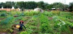 WWOOF-USA® - Worldwide Opportunities on Organic Farms, USA  Volunteer and get free room and board at many places