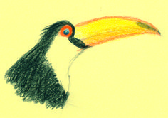 tucan Artis Pictures To Draw, Symbols, Drawings, Art, Art Background, Kunst, Sketches, Performing Arts, Drawing
