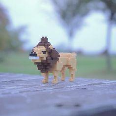 "8 mentions J'aime, 1 commentaires - nanoblock Michael (@itonoosi) sur Instagram: ""Lion king #ナノブロック #nanoblock #おもちゃ #toy #オブジェ #ライオン #lion #lionking #カメラ #camera #一眼レフ #岩 #山形 #公園…"""
