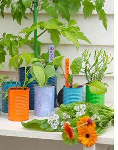 wow - add a colourful twist to old cans and use as herb planters, perfect for a modern apartment garden