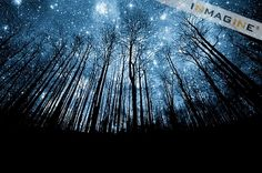 Tree silhouette against starry night sky – Photo of the nocturnal splendor of trees under a starry sky. Starry Night Sky, Night Skies, Starry Eyed, Forest Tumblr, Starry Night Wallpaper, Photo Bleu, Ciel Nocturne, Foto Transfer, Forest Wallpaper