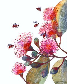 Pink Flowering Gum - flowers and bees, nature art print by OlaLiola