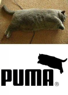 Diet quotes funny hilarious fat cats ideas for 2019 Funny Animal Memes, Stupid Funny Memes, Cute Funny Animals, Funny Relatable Memes, Funny Animal Pictures, Funny Cute, Funny Photos, Hilarious, Fat Funny
