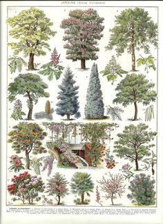 Vintage ORNAMENTAL TREES - Vintage french dictionary print poster - 1930. $14.00, via Etsy.