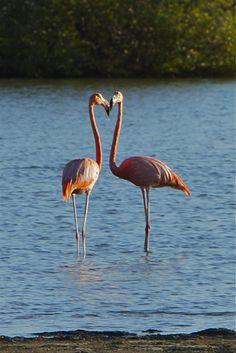 Flamingo's (gemaakt in Bonaire)