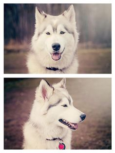 Malamute/husky mix. Both breeds are amazing!!!