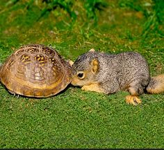 I knows you in dere...  #squirrels #tortoise #wildlife                                                                                                                                                                                 More