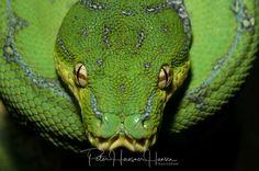 Snake  by PHOTOPHH.1