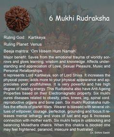 6 Mukhi Rudraksha..