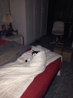 Les chats et leurs poses.
