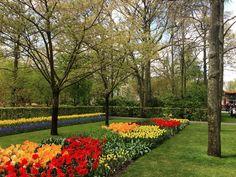 #keukenhof #keukenhofgardens #keukenhof2016 #tulipans #colorful #landscapestyles #vscoholland #passione_fotografica #nofilter #amazingview #amazing_pictures #best_photogram #color #vsco #vscocolor #lifetime #tree_captures #nature_perfection #nature_brilliance #amazing_holland #loves_flowers_ #loves_holland #bestoftheday #photo_art #landscapelovers #landscapestyles_gf #landscapes_worlds by giu_redfish27