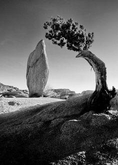 Surf Discover Ansel Adams Yosemite pine tree and boulder original Sierra Mountains black & white monochrome fine art print poster photograph Black And White Landscape, Black N White Images, Black White, Photo D Art, Foto Art, Ansel Adams Photography, Nature Photography, Portrait Photography, Berlin Photography