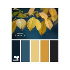 Autumn via Polyvore featuring design seeds