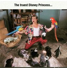 a I think Jim Carrey would make an amazing Disney Princess Disney Princess Memes, Disney Memes, Funny Disney, Ace Ventura Memes, Ace Ventura Costume, Jim Carrey Quotes, Jim Carrey Funny, Ace Ventura Pet Detective, Funny Instagram Posts