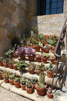 Cacti, cacti, cacti...from Elisabeth Bentz's blog