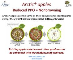 What do consumers think about biotech & the Arctic® apple? Apple Varieties, Agriculture Farming, Food Waste, Arctic, Apples, Natural, Color, Colour, Apple