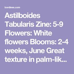 """Astilboides Tabularis Zine: 5-9  Flowers: White flowers  Blooms: 2-4 weeks, June  Great texture in palm-like leaves  Perfect for moist areas  Plant with Hosta, Heucherella and Astilbe Features Tolerates Moisture Butterfly Fragrant Deer Resistant Cut Flower Attractive Foliage Long Bloomer Sun Exposure Part Sun/Part Shade Flower Colors White Foliage Colors Green Foliage Height 30-36""""  Spread (Width) 30-36"""" Part Shade Flowers, Cut Flowers, White Flowers, Flower Colors, Colorful Flowers, North Facing Garden, Astilbe, Low Maintenance Plants, Common Names"""