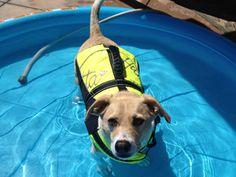 Teach Your Dog to Swim - Karen Pryor Clicker Training