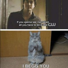 Funny! - Quotes - TVD - The Vampire Diaries