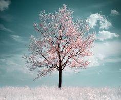 Le fait d'être seul un instant, ne veut pas dire que l'on sera seul l'instant suivant.