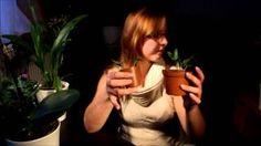 orchideen vermehren - YouTube